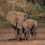 Что едят слоны?
