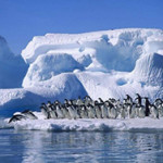 Что едят пингвины?