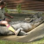 Домашние крокодилы