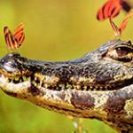 Строение крокодила