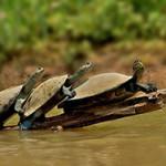Где живут черепахи? Места обитания морских, сухопутных и пресноводных черепах