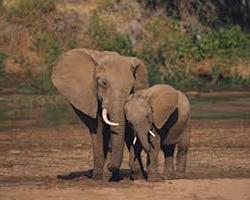 слоны и природа