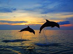 дельфины на рассвете