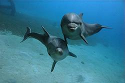 смешные дельфины