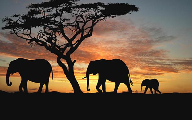 слоны на африканских просторах