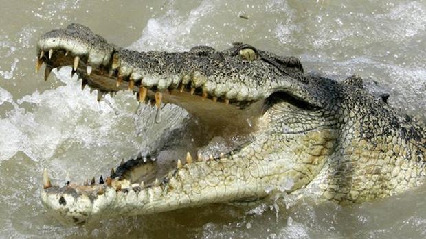 зубы крокодила фото