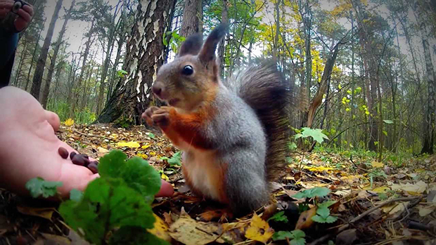 что ест белка в лесу