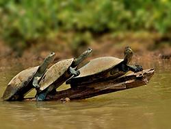 черепахи греются на солнце