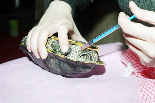 укол в заднюю часть черепахе